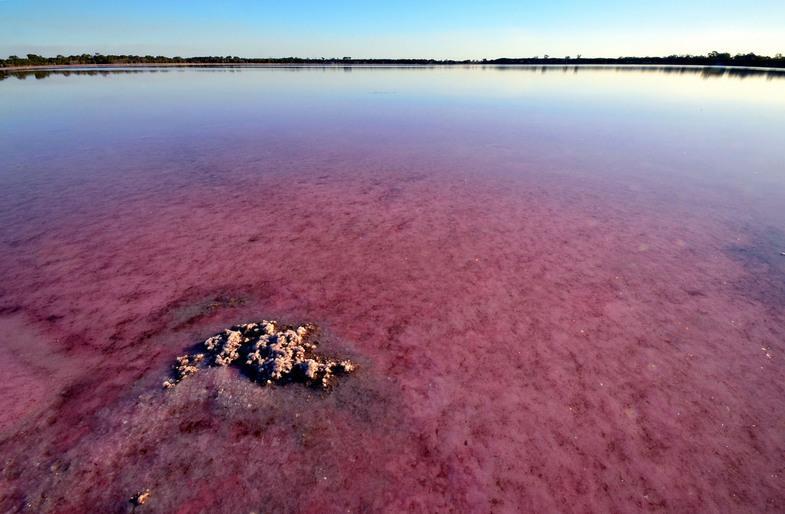 Lago rosa perto de Dimboola, Austrália