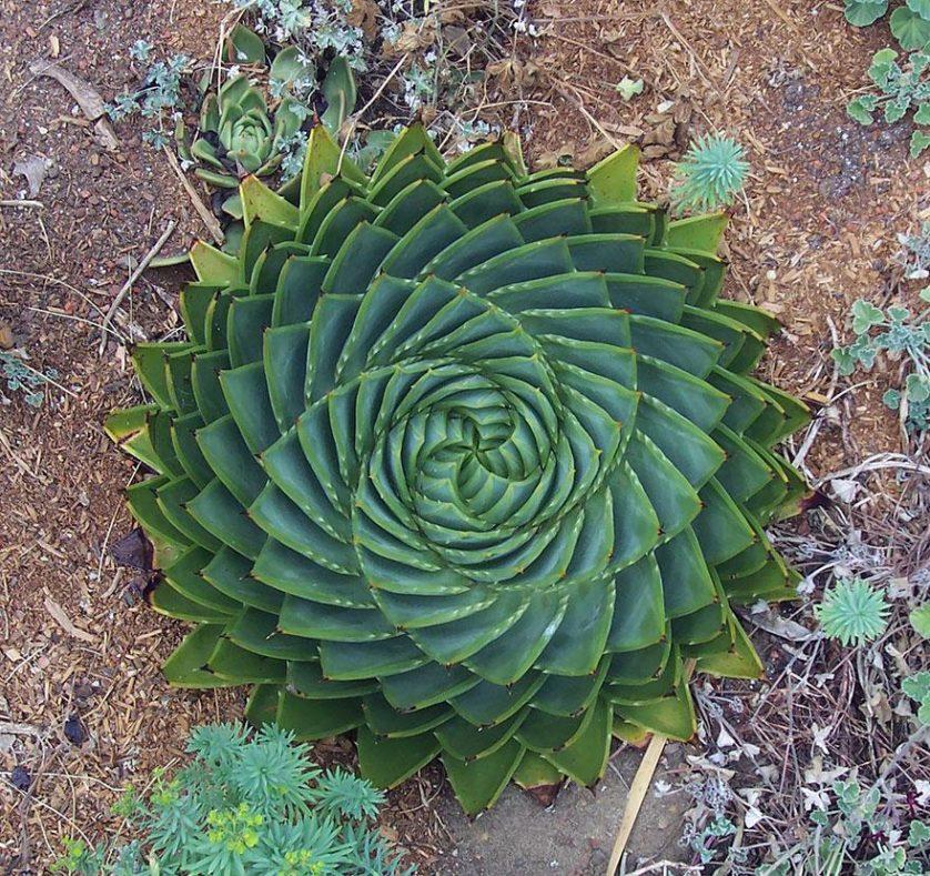 plantas geometricas 1