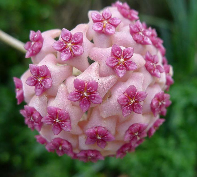plantas geometricas 10