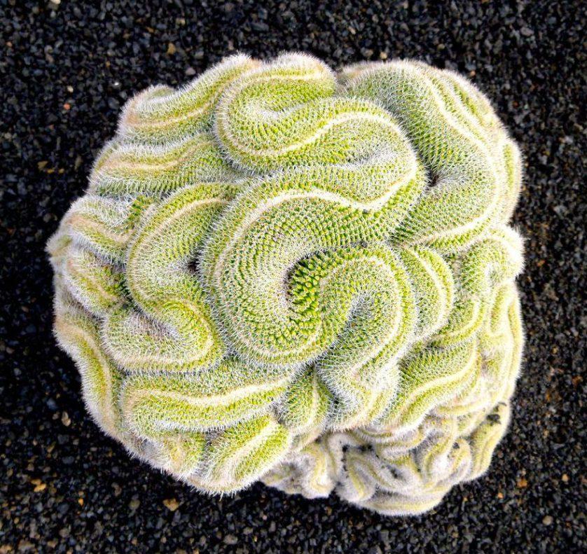 plantas geometricas 11