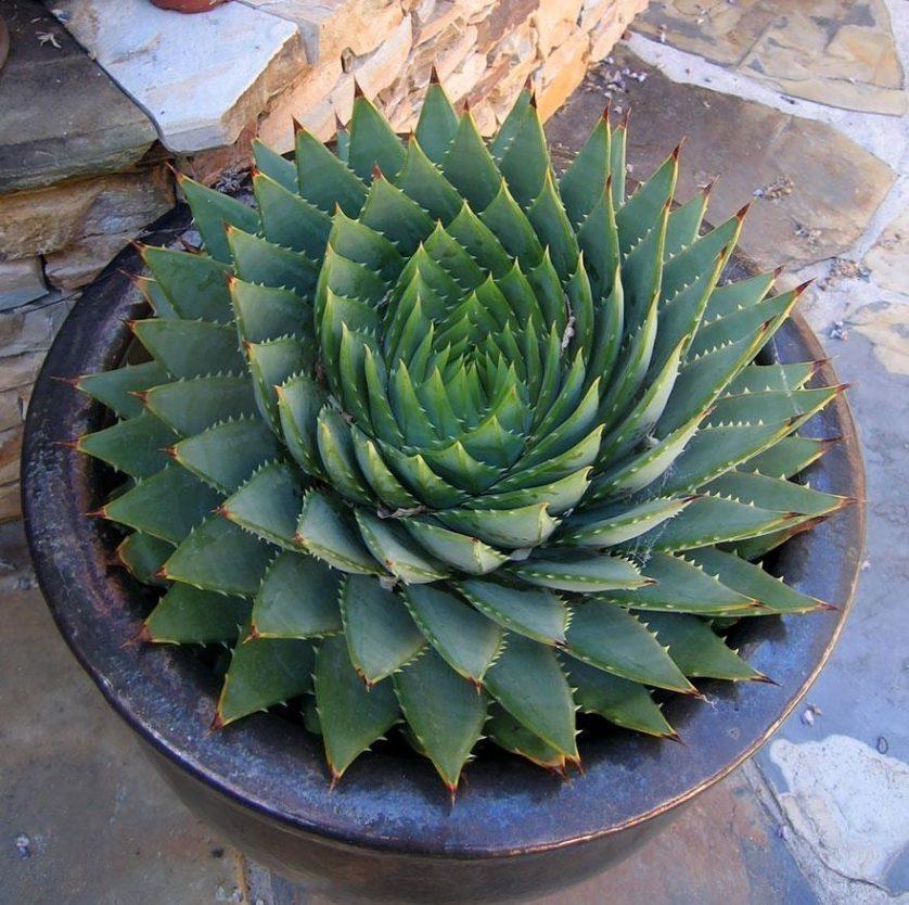 plantas geometricas 12