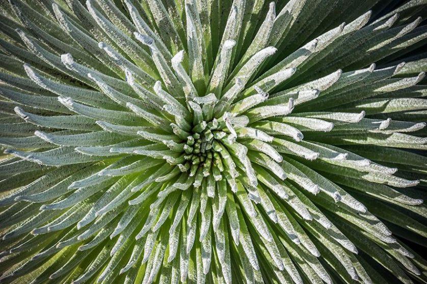 plantas geometricas 15