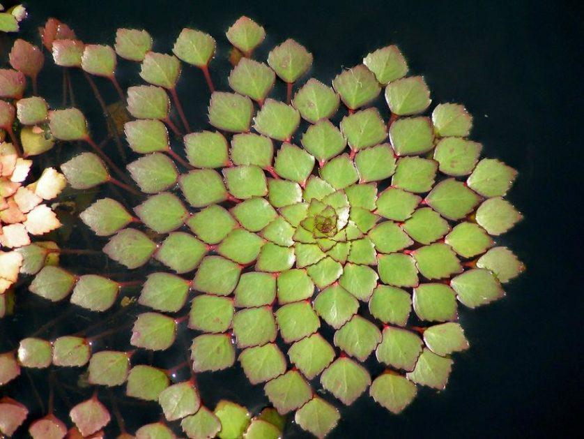 plantas geometricas 16