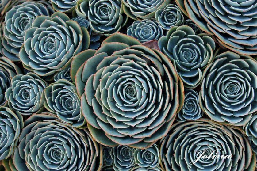 plantas geometricas 17