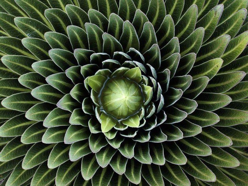 plantas geometricas 18