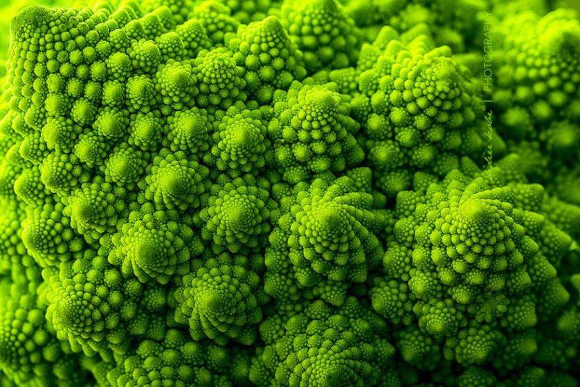 plantas geometricas 2