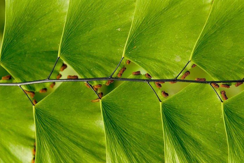 plantas geometricas 20