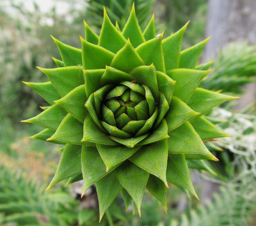 plantas geometricas 25