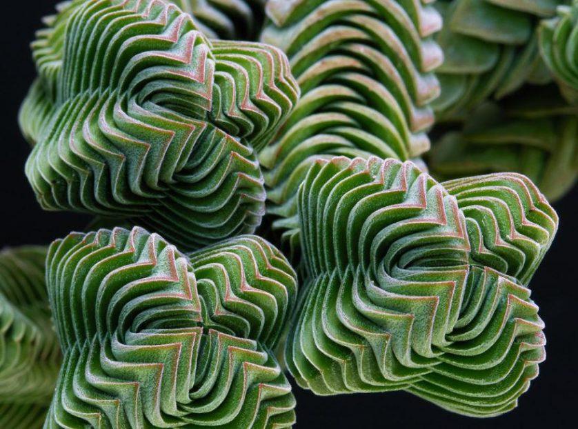 plantas geometricas 3