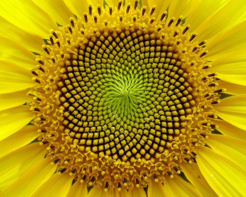 plantas geometricas 8