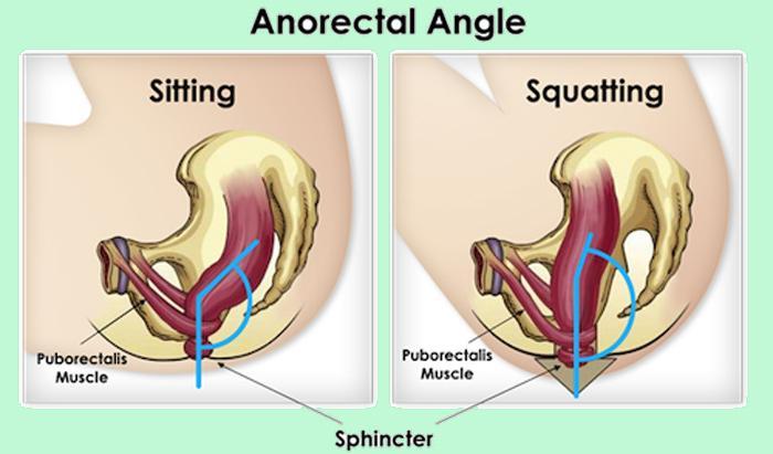 Esse desenho mostra a diferença entre o ângulo da posição sentada (à esquerda) vs. agachada (à direita)