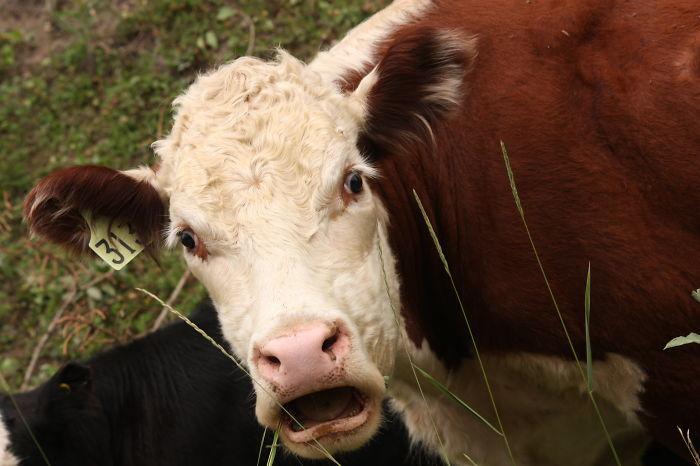 animais surpresos atonitos (17)
