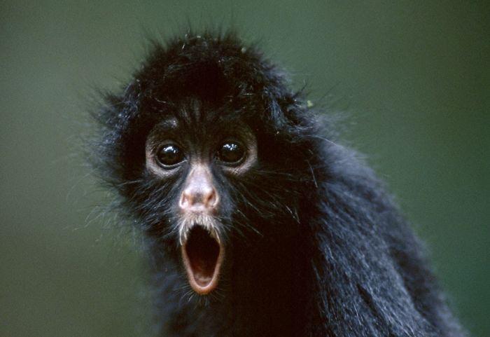 animais surpresos atonitos (4)