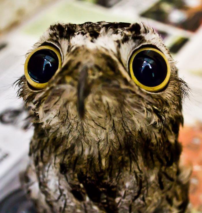 animais surpresos atonitos (5)