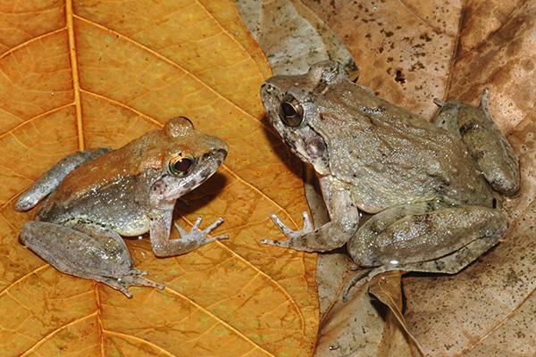 espécies descobertas em 2015 04