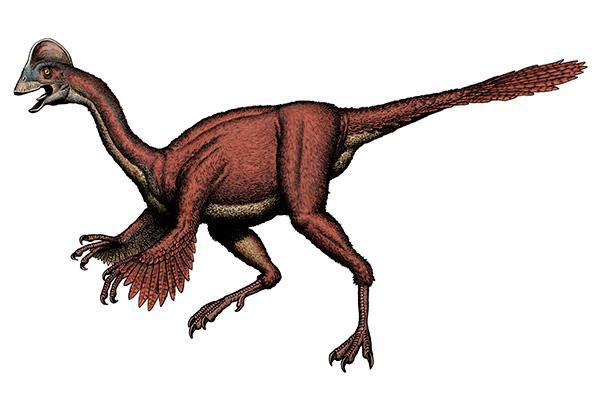 espécies descobertas em 2015
