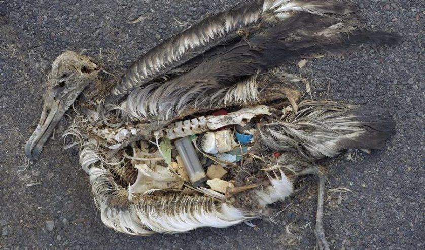 lixo meio ambiente 3