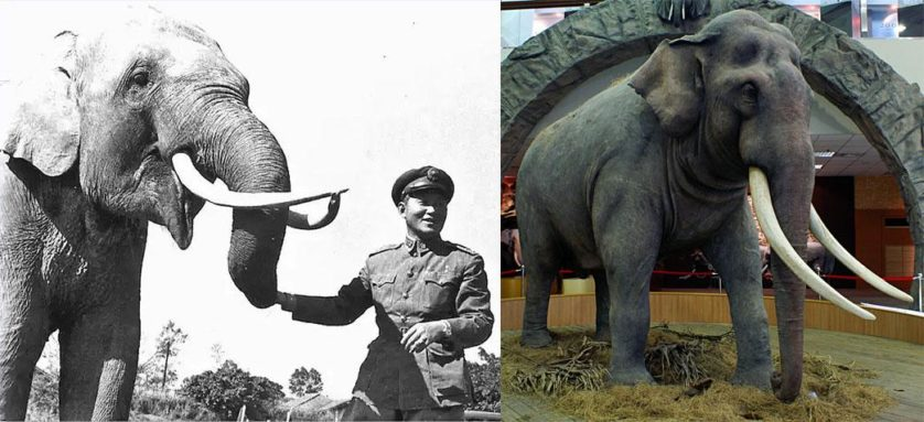 animais velhos do mundo 8