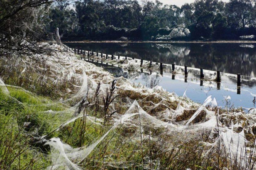 chuva de aranhas australia2