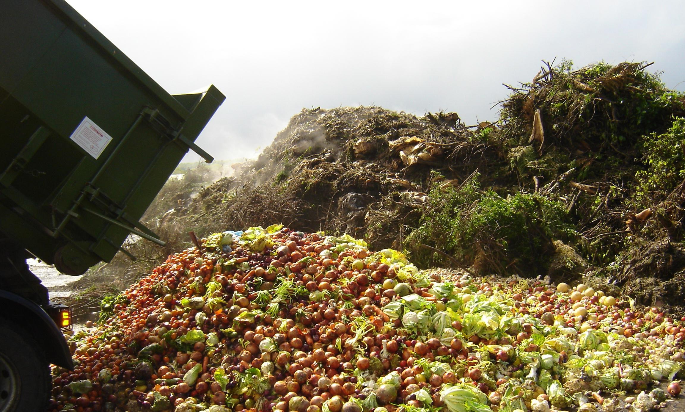 Resultado de imagem para comida desperdiçada