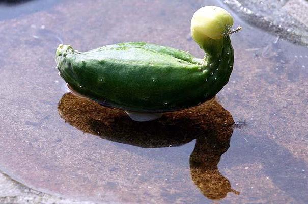 frutas e legumes que parecem outra coisa 24