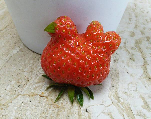 frutas e legumes que parecem outra coisa 4