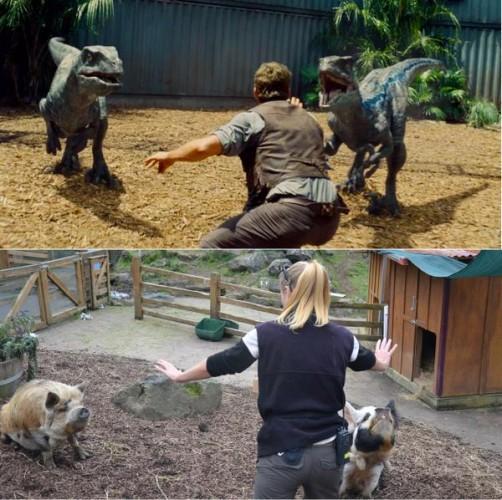 Do Jardim Zoológico de Auckland (Austrália)