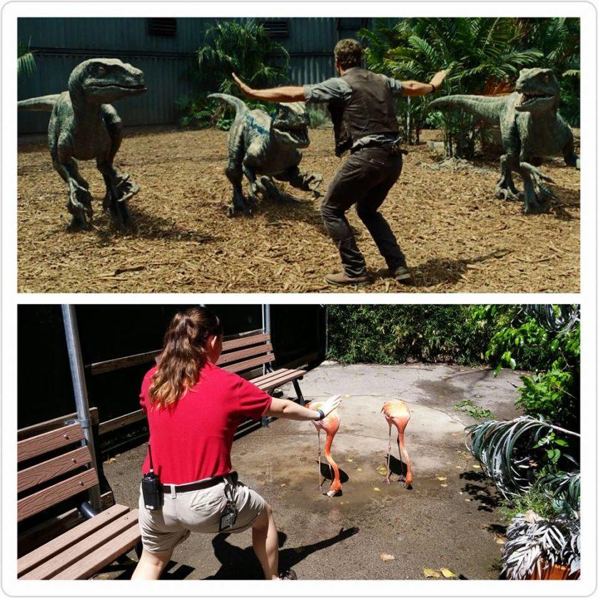 Por Shelby Storrie, do Jardim Zoológico de Dallas (EUA)