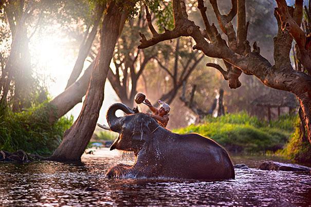animais que amam tomar banho (16)