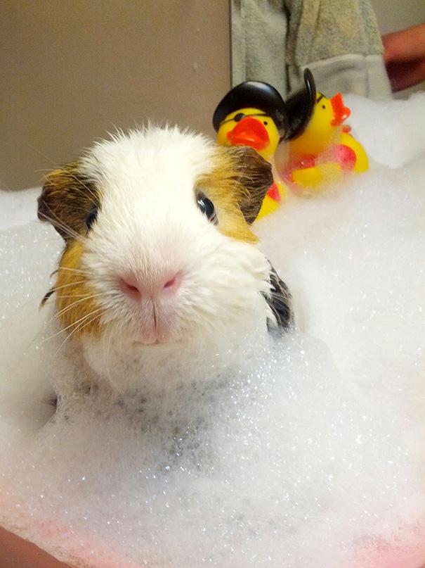 animais que amam tomar banho (17)