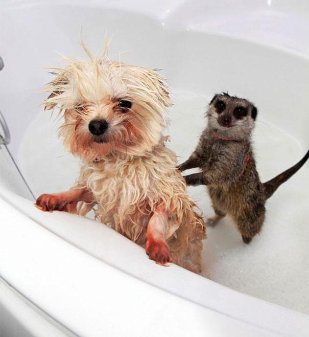 animais que amam tomar banho (3)