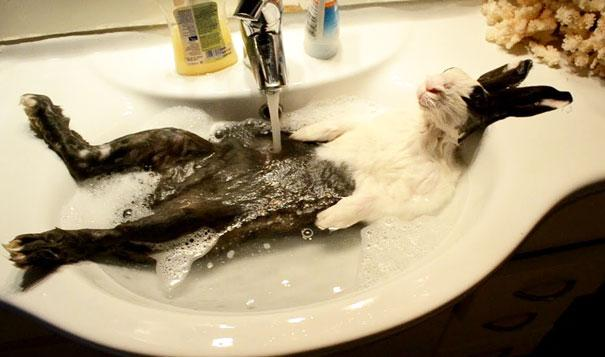 animais que amam tomar banho (4)