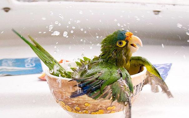 animais que amam tomar banho (6)