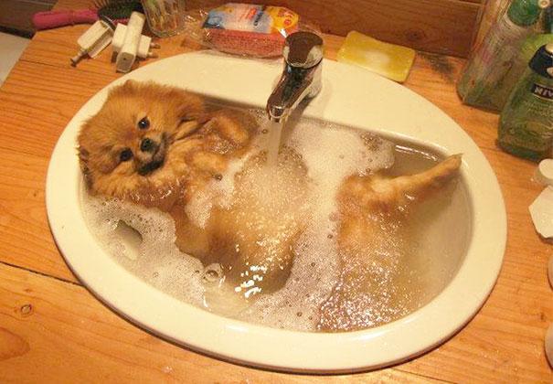 animais que amam tomar banho (9)