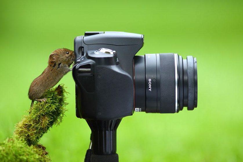 animais que querem ser fotografos (10)