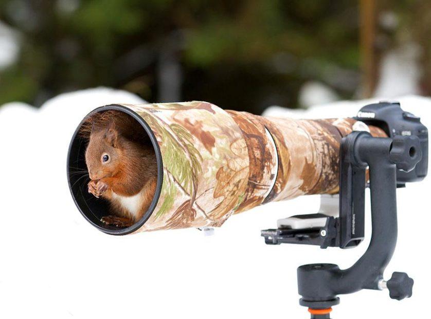 animais que querem ser fotografos (11)