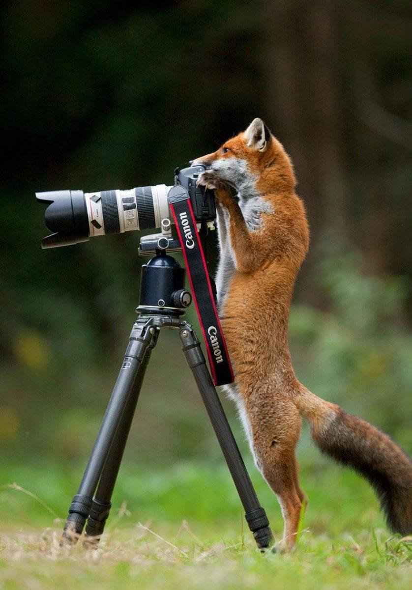 animais que querem ser fotografos (12)