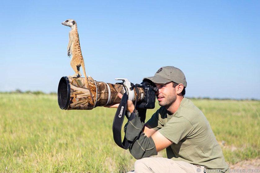 animais que querem ser fotografos (14)