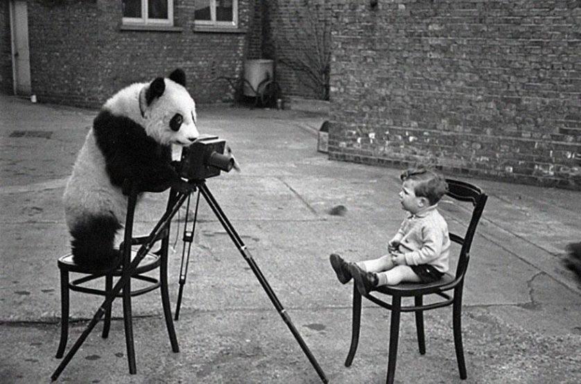 animais que querem ser fotografos (15)