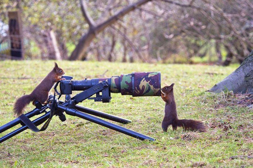 animais que querem ser fotografos (16)