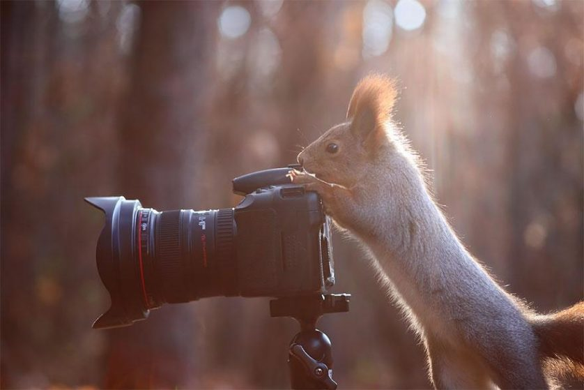 animais que querem ser fotografos (18)