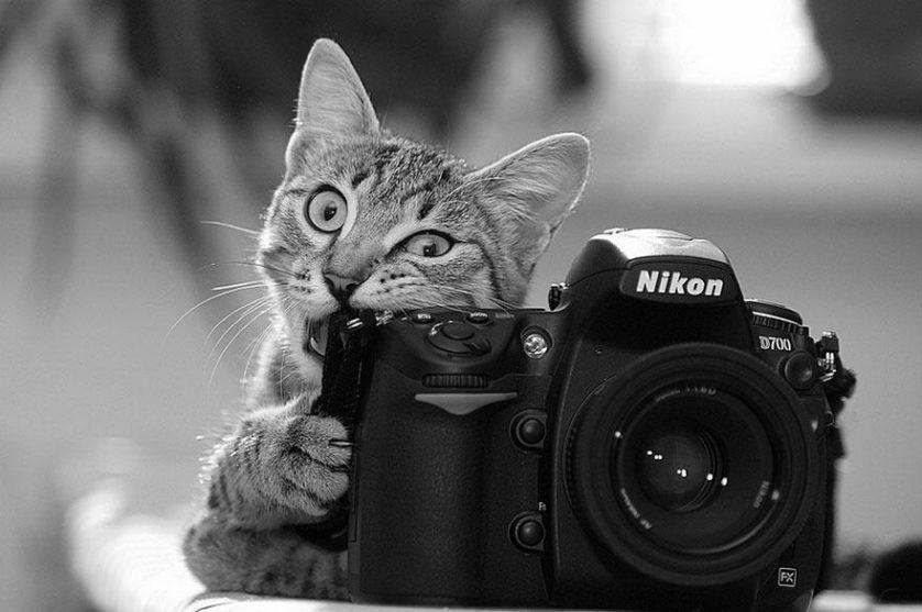 animais que querem ser fotografos (19)