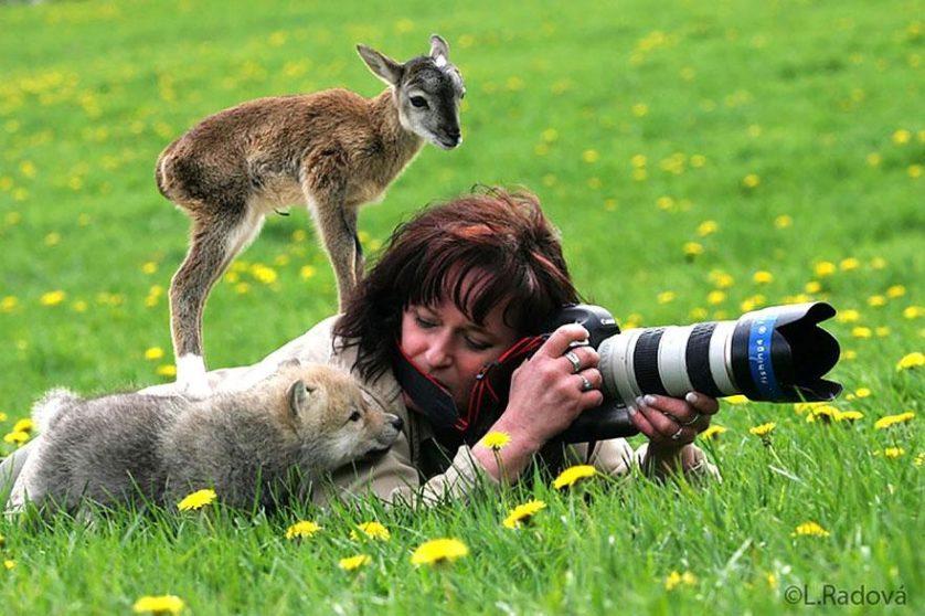fotos de animais fotógrafos