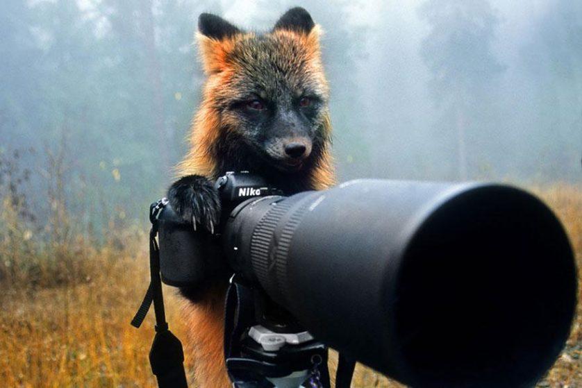 animais que querem ser fotografos (20)