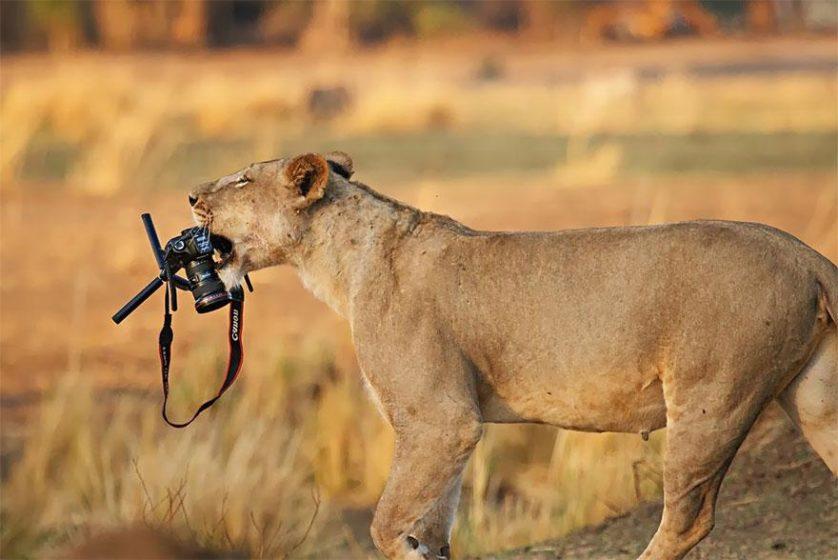 animais que querem ser fotografos (21)