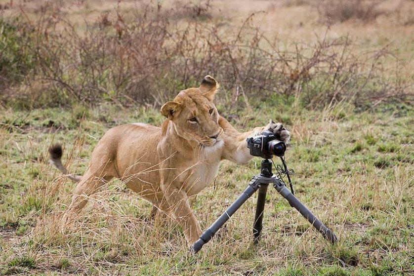 animais que querem ser fotografos (22)