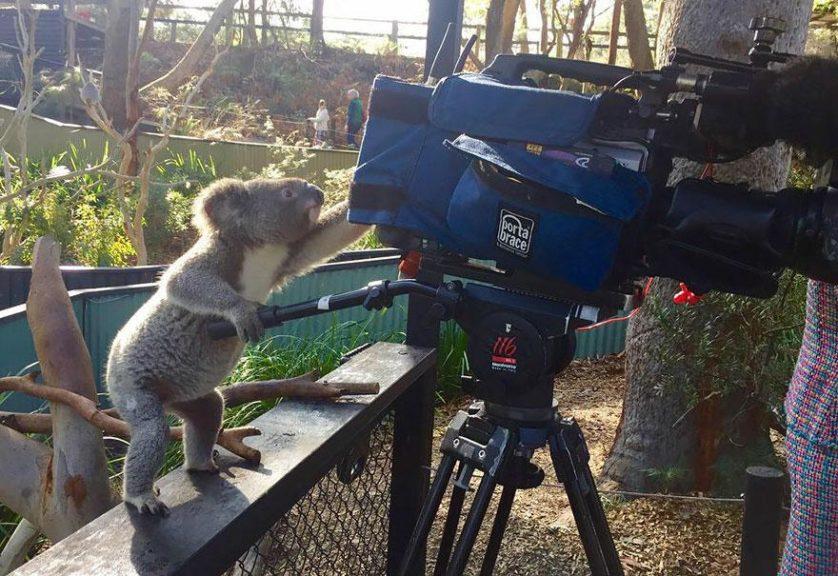 animais que querem ser fotografos (3)