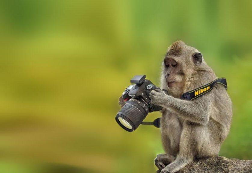 animais que querem ser fotografos (9)