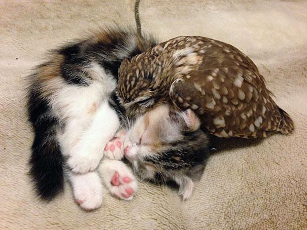 corujinha e gato melhores amigos (1)