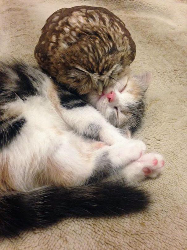 corujinha e gato melhores amigos (2)